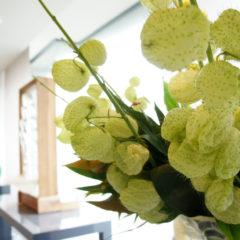 9月のお花は、風船の実。